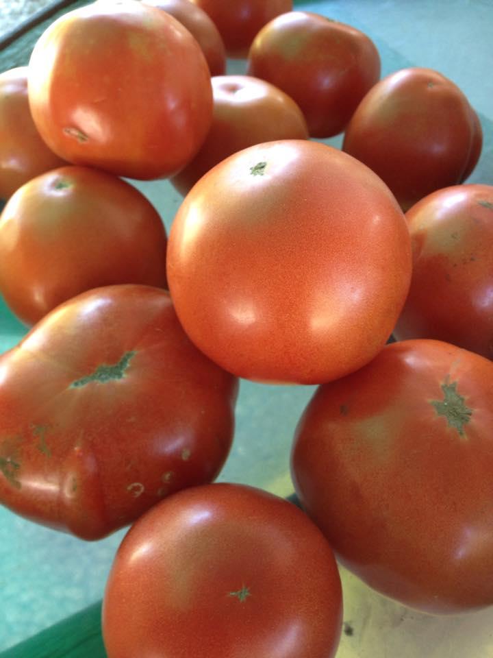 Tomatos at Fenik's Sweet Corn